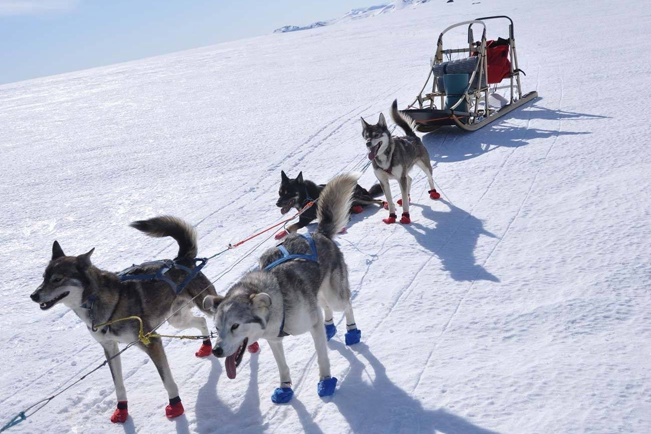 Dog sledding, best winter activity in Norway | Beito Husky Tours