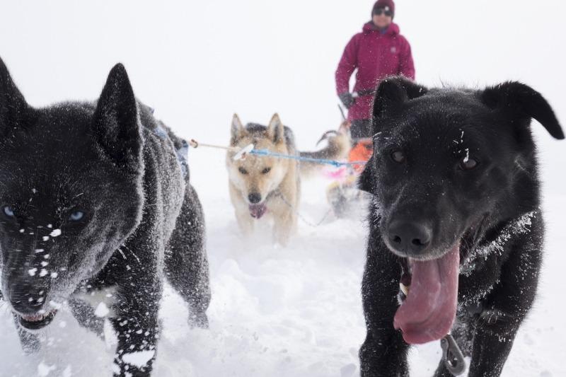 Dog sledding adventure Norway | Beito Husky Tours