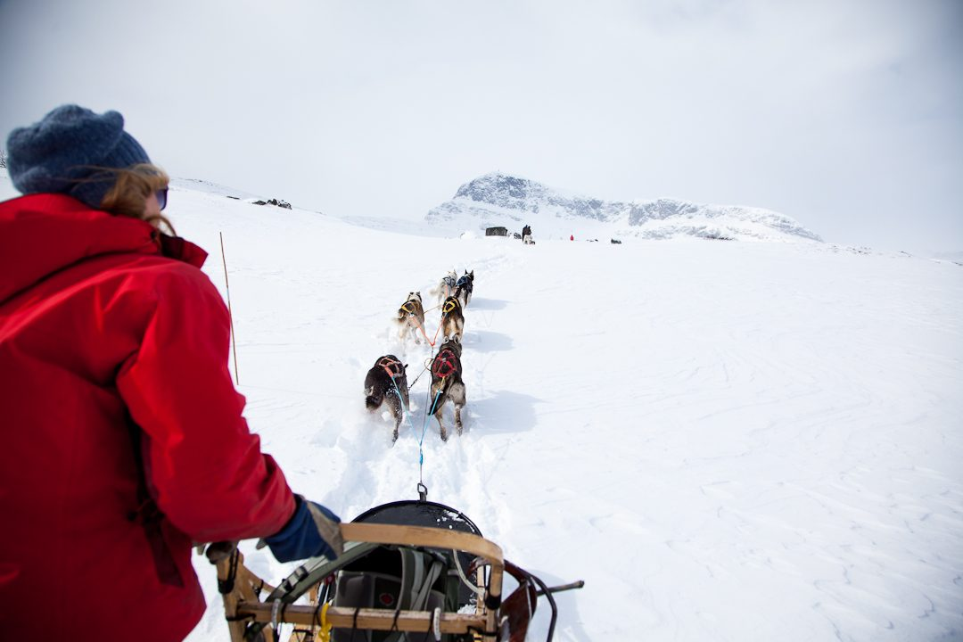Husky dog sledding Oslo Norway | Beito Husky Tours