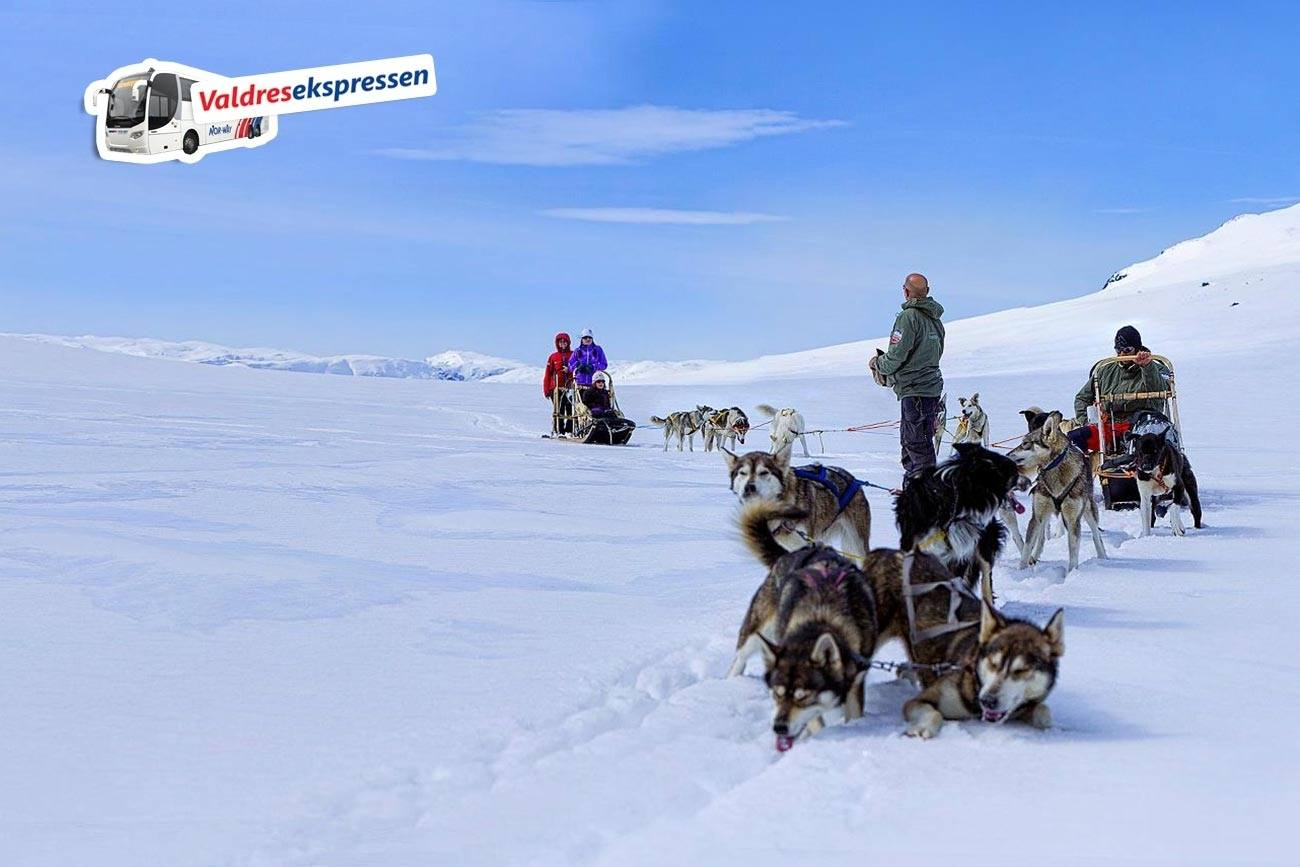 Husky Oslo Day trip. Dog sledding in Norway | Beito Husky Tours