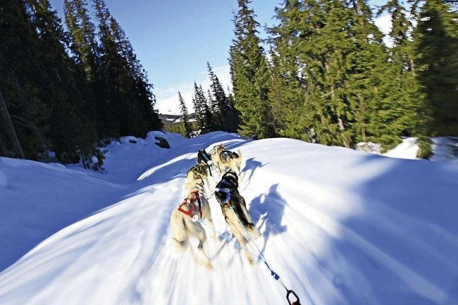 DAY TOUR WITH HUSKY SLEDS FROM OSLO CITY