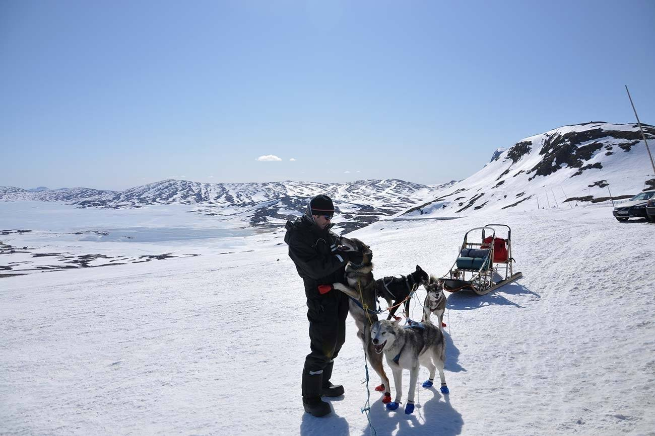Dog sledding Norway Jotunheimen National Park | Beito Husky Tours