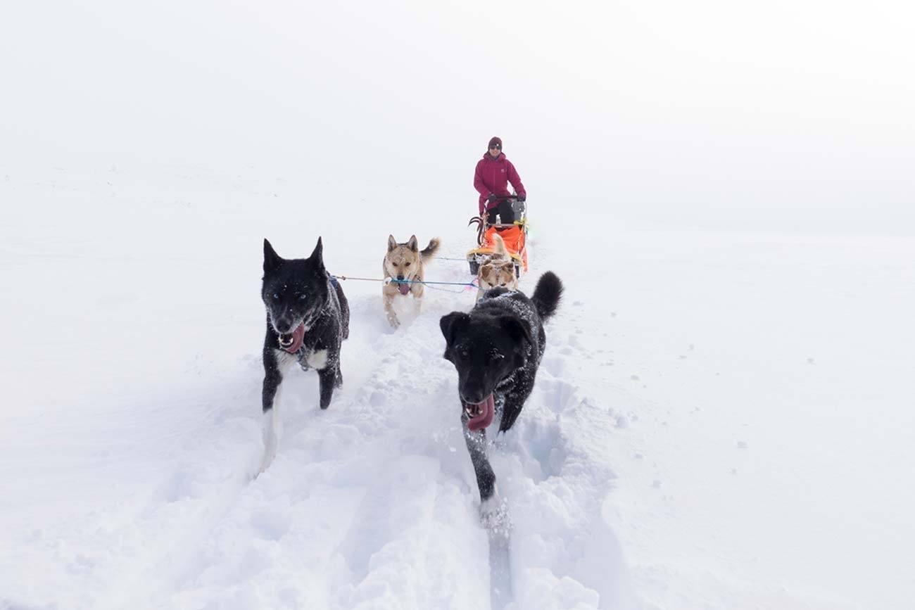 Two days husky sledding experience | Beito Husky tours