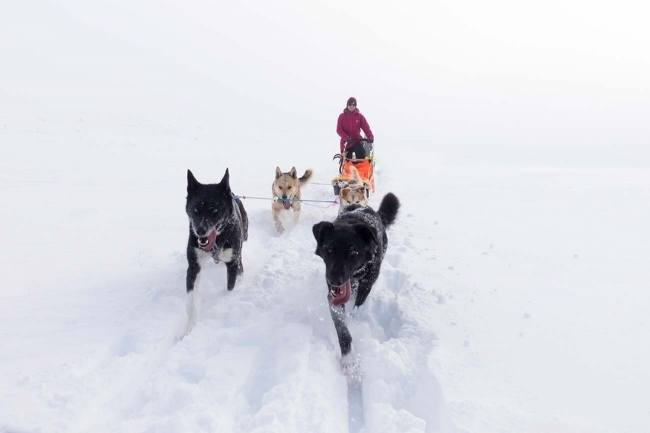Beito Husky Musher Experience - 2 days expedition-