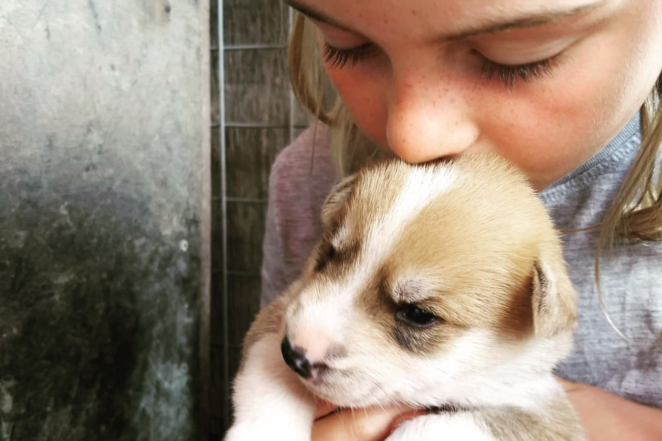 Socialising husky puppies | Beito Husky Tours