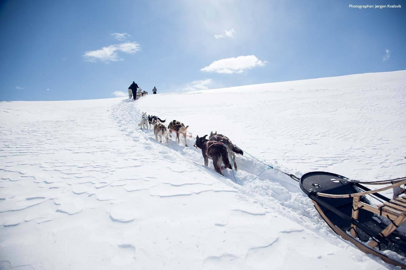 Dog sledding day trip adventure in Norway | Beito Husky Tours