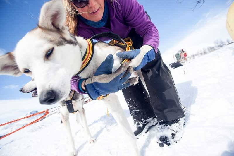 A hands-on dogsledding experience leaded by profesional guides