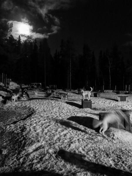 Howling huskies - Beito husky Tours
