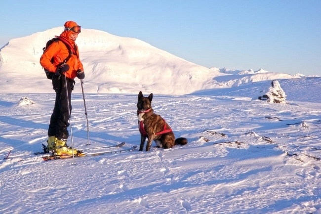 HUSKY TEAM ASSISTED BACK COUNTRY SKITOUR - 3 days expedition -