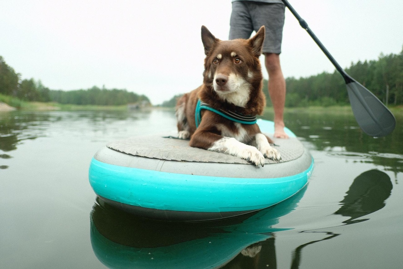 Sup with a PUP event Beitostølen Norway / Beito Husky Tours