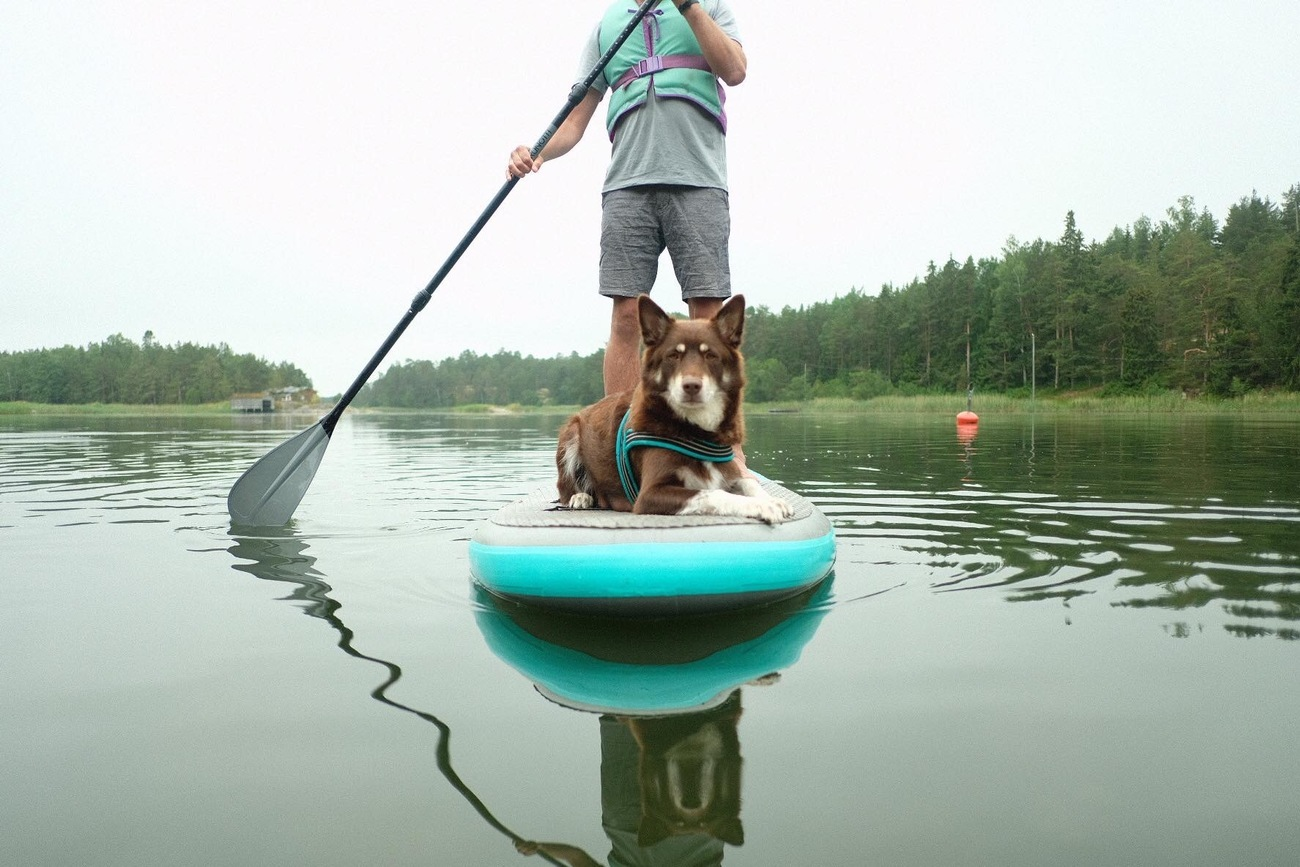 Sup with a PUP guided activity Beitostølen Norway / Beito Husky Tours