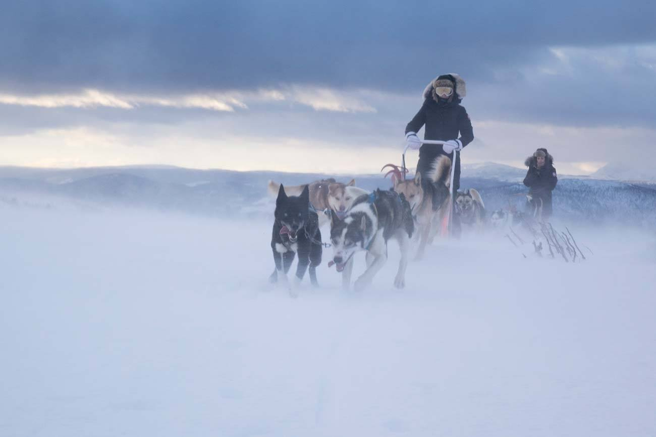 4 days dog sledding tour in Norway | Beito Husky Tours