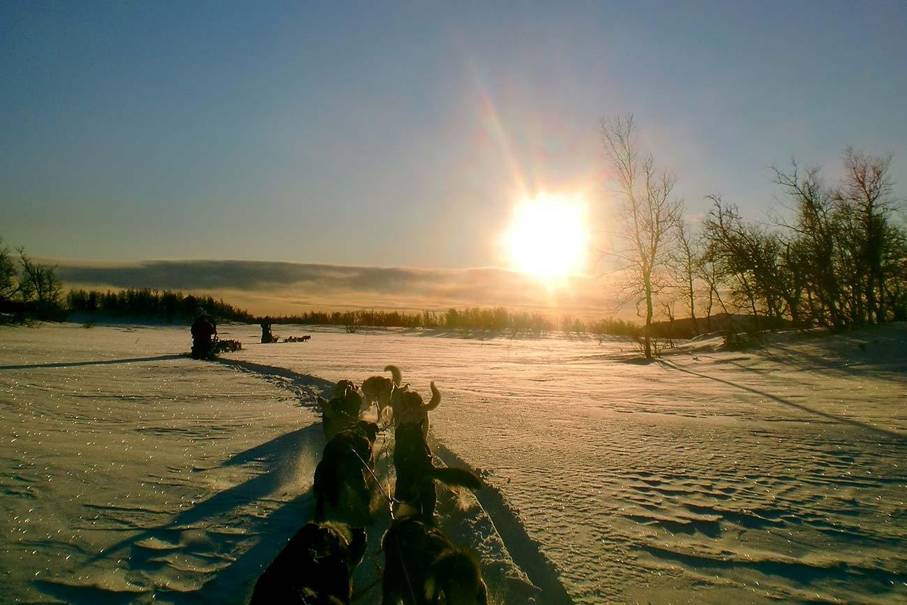 Dog sledding in the sunset | Beito Husky Tours
