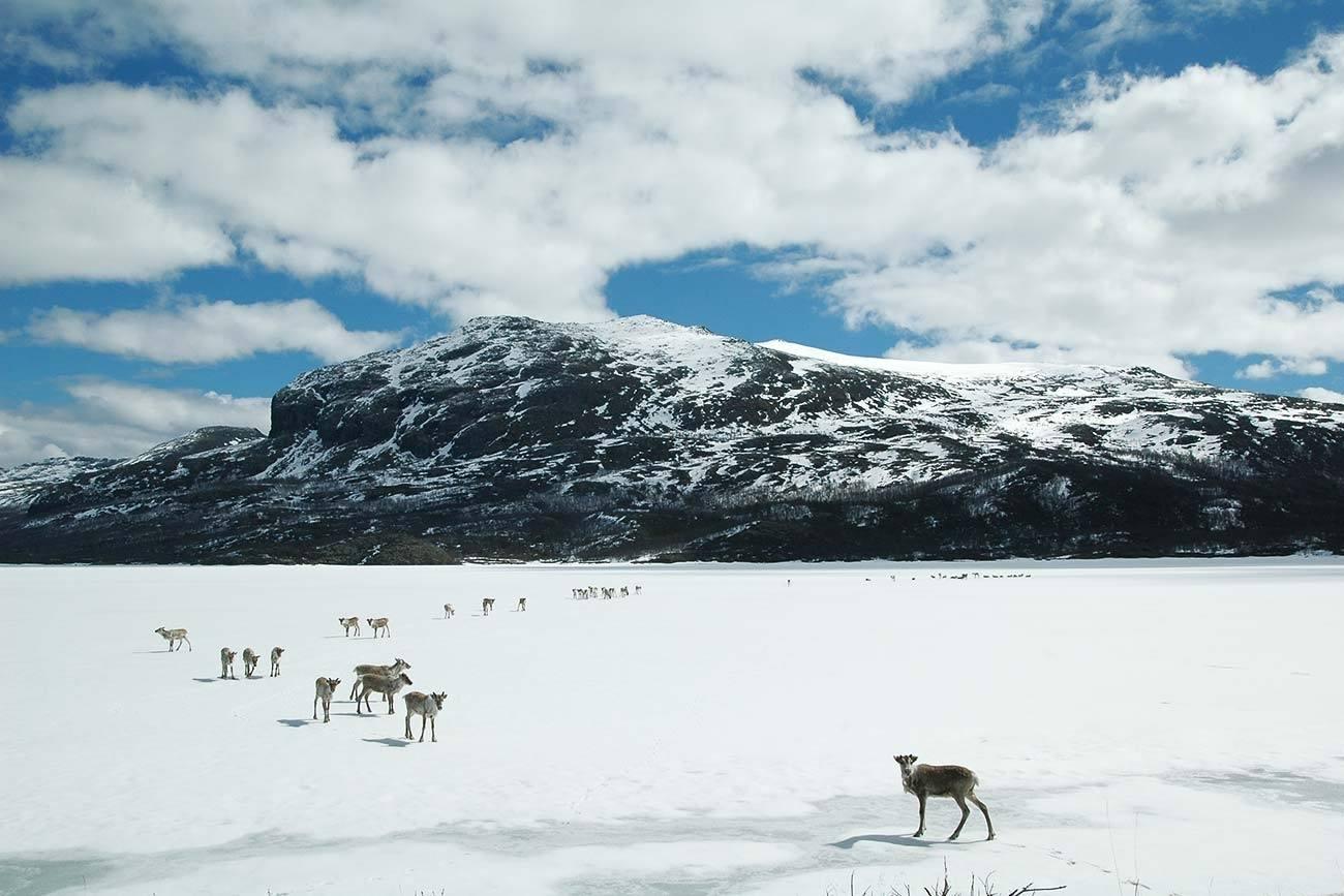 Wildlife in Langsua and Jotunheimen | Beito Husky Tours