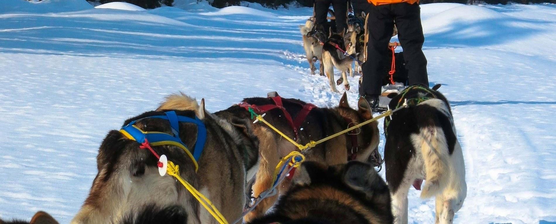 Beito Husky Tours Activities Winter/Spring