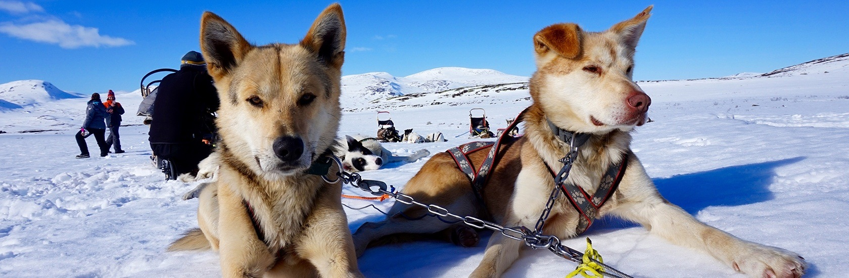 Beito Husky Tours Privacy Policy